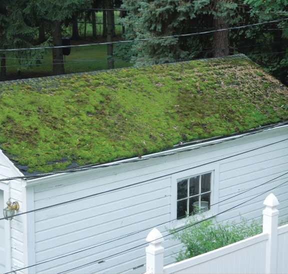 I & Moss Build-Up on Roofs « Welcome to Property Source Nation! memphite.com